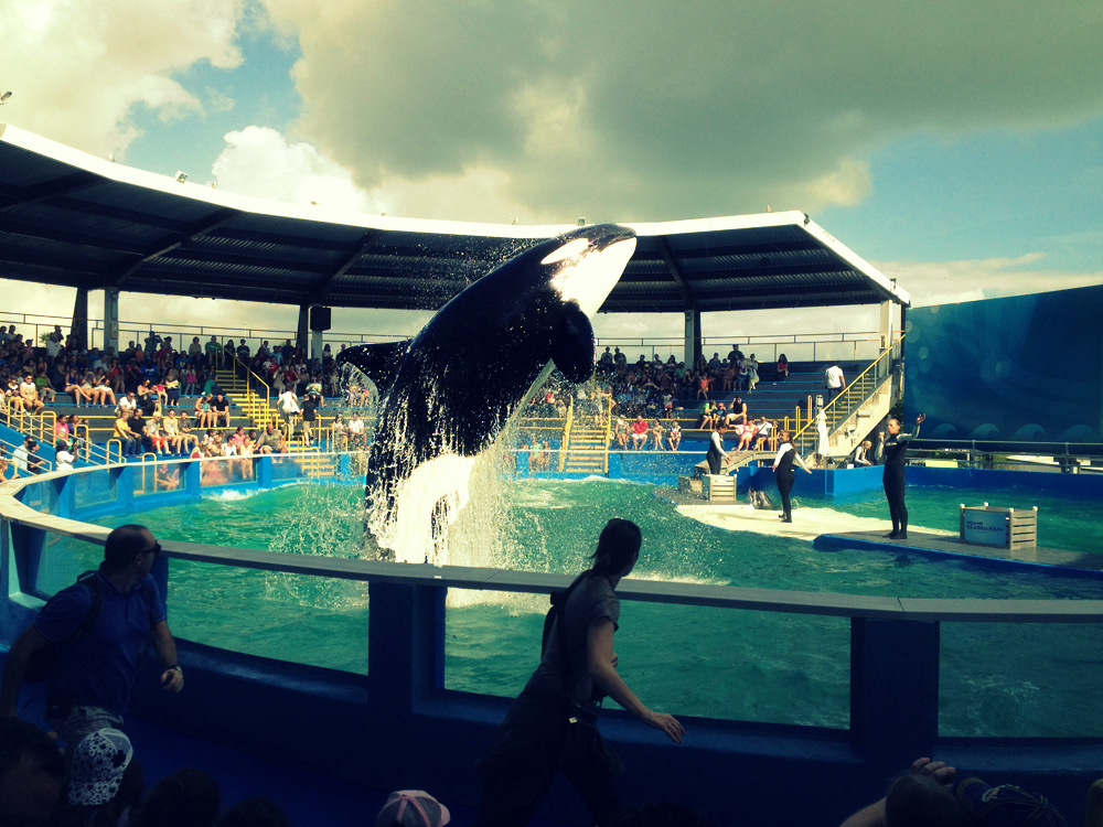 America Diaries: Miami Sea Aquarium
