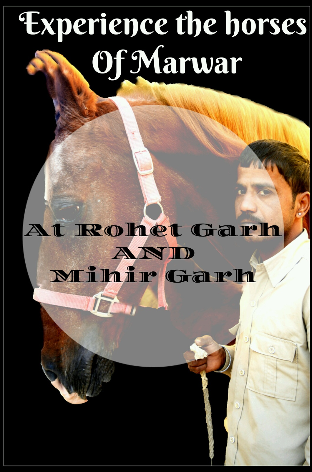 Experience the horses of Marwar at Rohet Garh and Mihir Garh