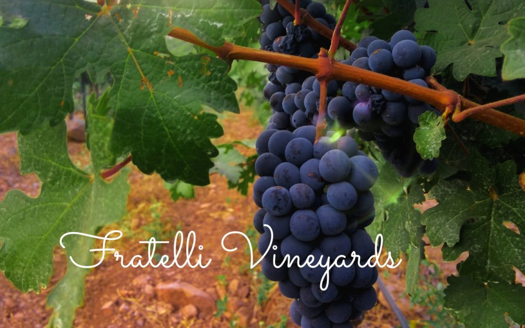 Fratelli Vineyards: Enjoying wines in India's Napa Valley
