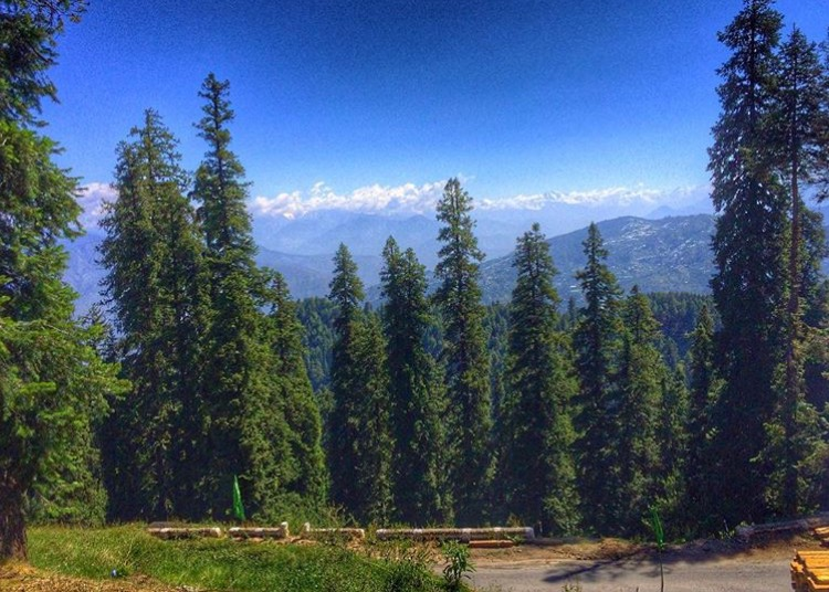 Narkanda : A bit of Switzerland near Shimla
