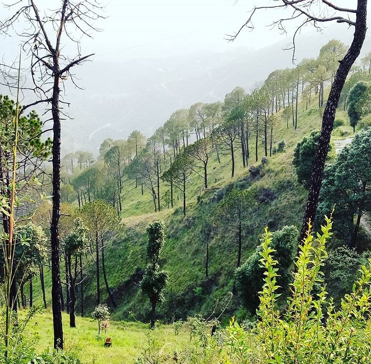 Kasauli – A quaint colonial era hill station