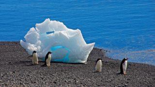 Antarctica: The most offbeat destination ever
