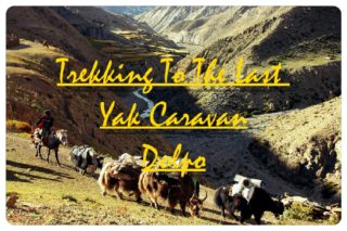 Trekking to the last Yak Caravan in the world: Dolpo